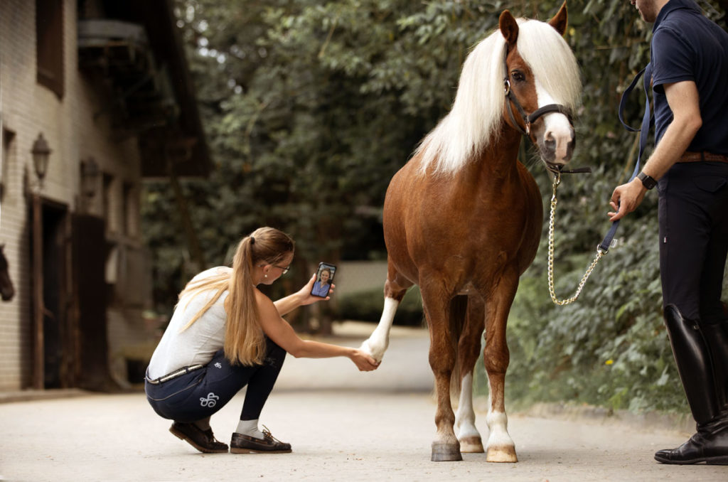 HorseVet24. Tierärztliche Hilfe per Handy auch für Ponys