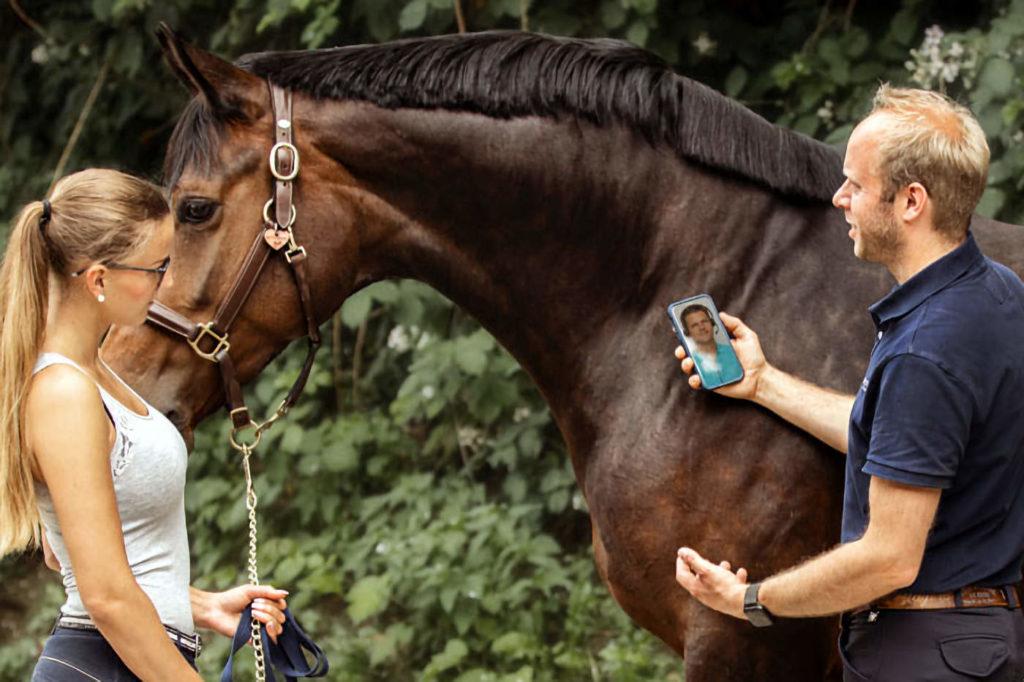 Online-Beratung durch Pferdetierarzt, Telemedizin Pferde, Online Pferdetierarzt