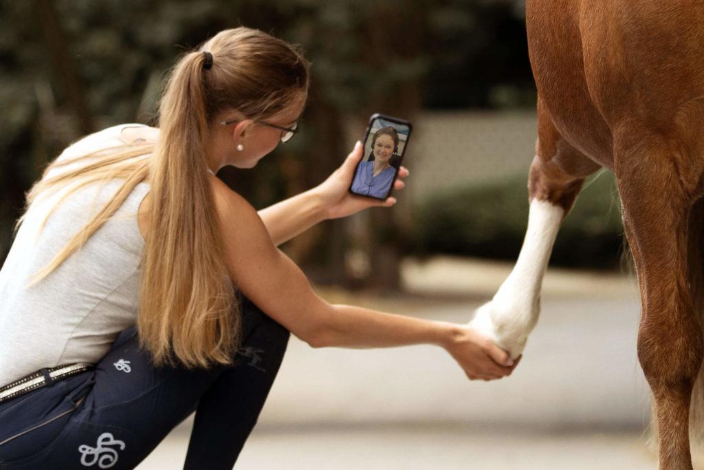 Telemedizin_Pferd_Online_Beratung_Pony